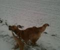 hund_pind_sne_vinter