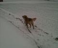 hund_pind_vej_sne_vnter