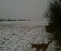 vinter_mark_sne_hund_skov