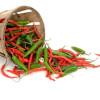 Chili dyrkning guide – vejledning i at dyrke chili planter