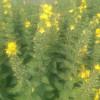 Vilde planter i naturen til din have