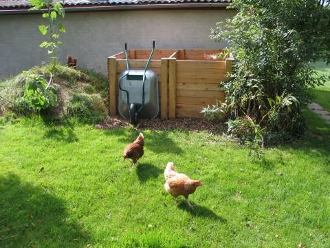 høns ved komposten