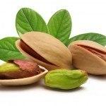 pistacie - fra nød til træ - dyrkning