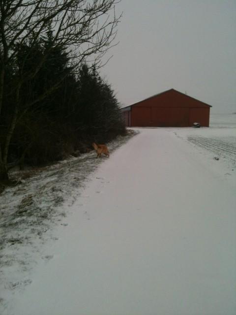 vinter vej sne lagerhal